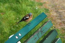 Free Sparrow On A Bench Royalty Free Stock Photography - 4477407