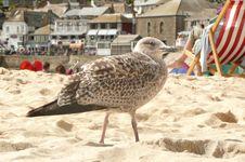 Free Beach Gull Stock Photography - 4477662