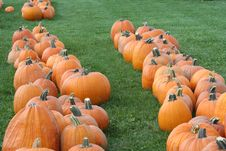 Free Pumpkin Patch Royalty Free Stock Photos - 4477768