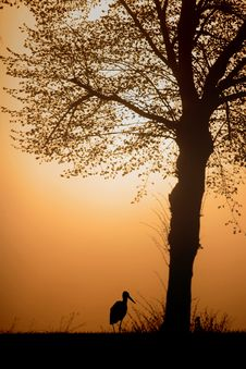 Free Stork Next To The Tree Stock Images - 4479734