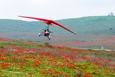 Free Flight Over Poppies Stock Image - 4479861