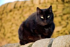 Free Black Cat Royalty Free Stock Photo - 4480105