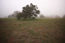 Foggy Countryside And Oak Trees Royalty Free Stock Photos