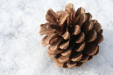 Free Fir Cone Royalty Free Stock Photography - 4480817