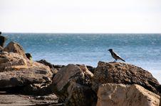 Free Sea Shore Royalty Free Stock Photos - 4484588