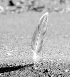 Free Feather Stock Photography - 4485442