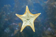 Free Starfish Deep In The Ocean Royalty Free Stock Photos - 4485478