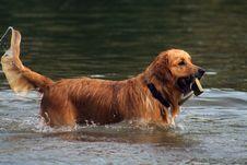 Free Wet Dog Stock Image - 4485911