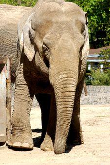 Free Elephant Stock Photo - 4486880