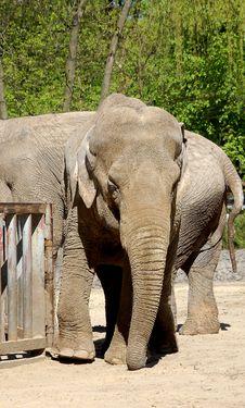 Free Elephant Stock Image - 4486911