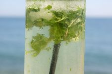 Free Mojito By The Sea Stock Photography - 4488692