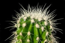 Free Cactus Spikes Royalty Free Stock Photography - 4489057