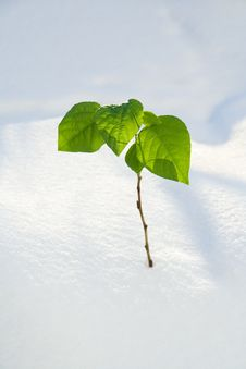 Free Green Spring A Branch Stock Image - 4489661