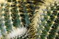 Free Cactus Closeup Royalty Free Stock Photography - 4491637