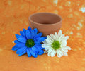 Free Blue And White Daisies And Flowerpot Stock Photography - 4493882