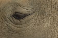 Free Eye Of The Rhinoceros Stock Photos - 4490043