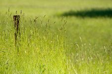 Free Spring Meadow Royalty Free Stock Image - 4490766