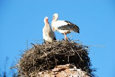 Free Loving Storks Royalty Free Stock Images - 4491239