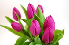 Free Bouquet Of Tulips Royalty Free Stock Photo - 4491545