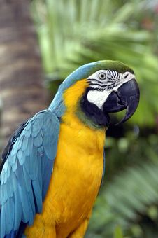 Free Tropical Parrot Royalty Free Stock Image - 4492346