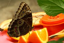 Free Buckeye Butterfly Stock Images - 4492484