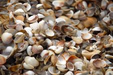 Free Shells Stock Images - 4492734