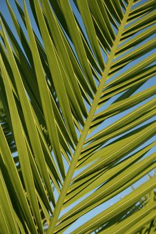 Free Palm Leaf Stock Image - 4493051