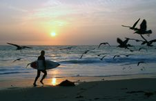 Free Sunset Surfer Royalty Free Stock Images - 4493269
