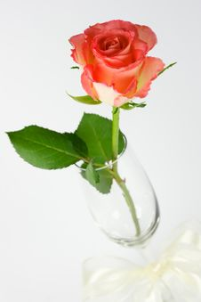 Free Red Rose In A Champagne Glass Royalty Free Stock Images - 4493469