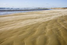Free Wind On The Beach Royalty Free Stock Photo - 4493575