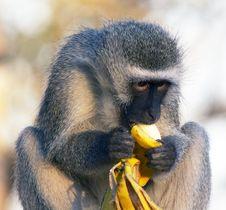 Free Monkey Stock Images - 4495474