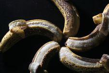 Free The Banana Star Stock Photo - 4498610