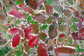 Free Wintry Leaves Stock Photo - 458640