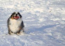 Free Snow Days Stock Photography - 450122