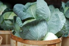Free Cabbage Stock Photography - 453212