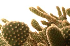 Free Cactus Detail Stock Photos - 454033