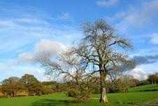 Free Meadows In Autumn Stock Photos - 457403