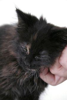 Happy Baby Black Kitten Stock Photos