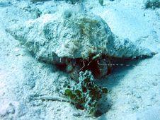 Free Hermit Crab Royalty Free Stock Photo - 458645