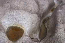 Free Stone Stock Images - 458844