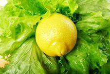 Free One Lemon Royalty Free Stock Photos - 4500998