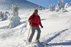 Free Skier Moving Through Icy Forest Royalty Free Stock Photo - 4501435