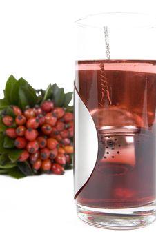 Free Rosehips Tea Stock Photo - 4504240