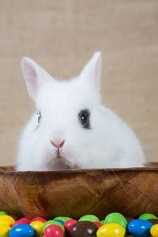 White Bunny And Chocolate Eggs Royalty Free Stock Photos