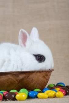 Free White Bunny And Chocolate Eggs Stock Photography - 4504282
