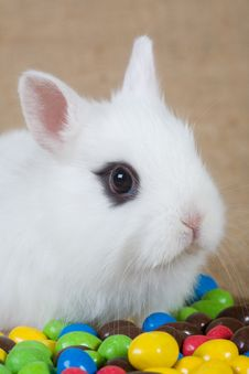 Free White Bunny And Chocolate Eggs Royalty Free Stock Photography - 4504297