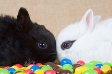 Free Two Bunny And Chocolate Eggs Stock Photography - 4504312