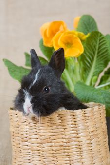 Free Black Bunny And A Yellow Flower Royalty Free Stock Photography - 4504397