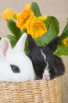 Two Bunny And A Yellow Flower Stock Photography