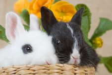 Two Bunny And A Yellow Flower Stock Image